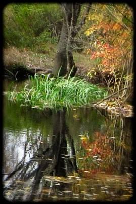 pondscape 4