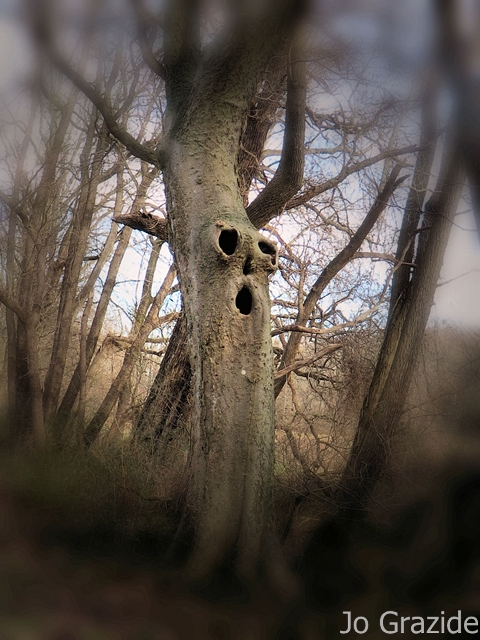 surprise tree R0C0 1