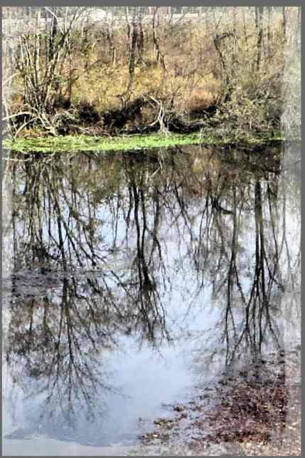 Pondscape
