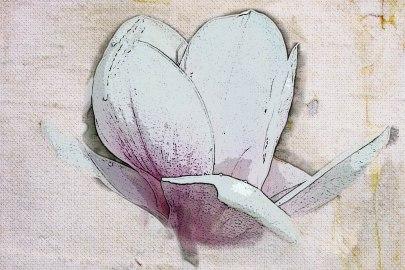 magnolia-in-posterization